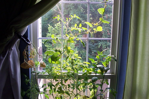 The Windowsill Garden Goes Crazy | by Kevin Lawver