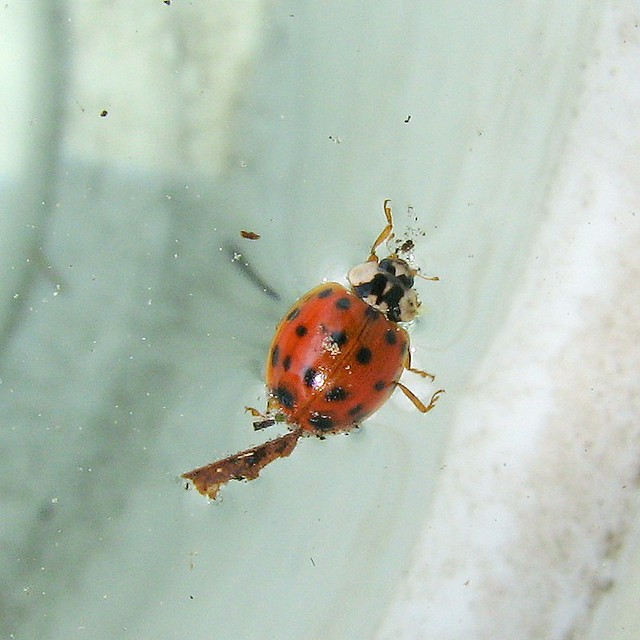 Insects R Gone bug of the day ...
