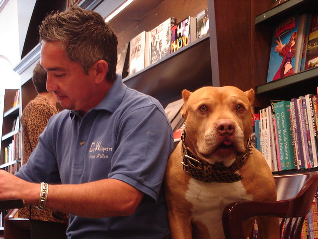 Cesar Millan That S Not A Dog