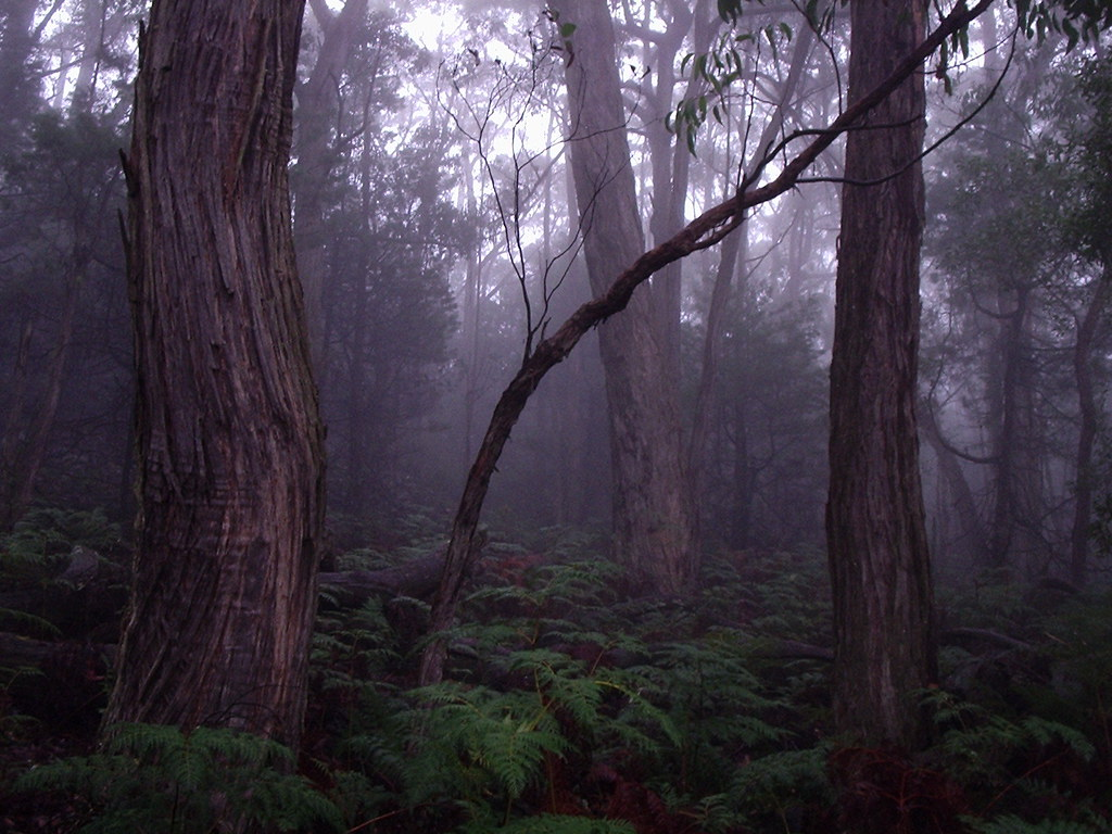 foggy forest by a - photo #43