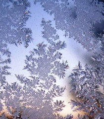 Frost Ferns | by CaptPiper