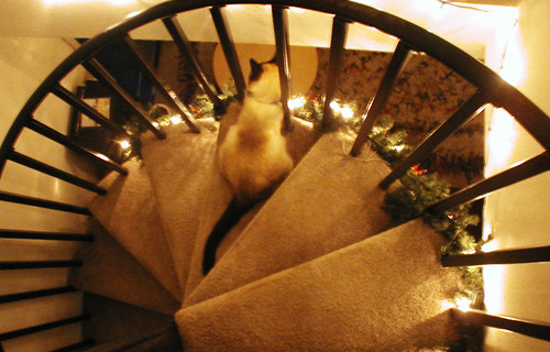 day in the life: chapin on the stairs | by emdot