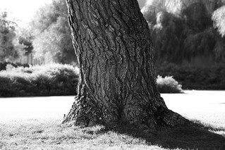 Trunk | by Bistrosavage