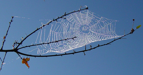 Spider web against sky September 28 03 | by Martin LaBar (going on hiatus)