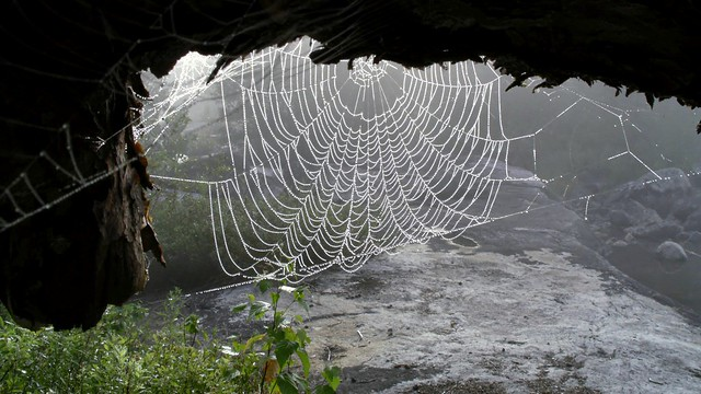 Misty Spider Web Woke Up Just As The Fog Was Burning Off