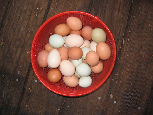 Eggs In Basket | by calpsychik