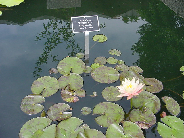 US National Arboretum Water Lily Map It Google Earth Flickr - Us national arboretum map