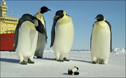 Real And Not Penguins