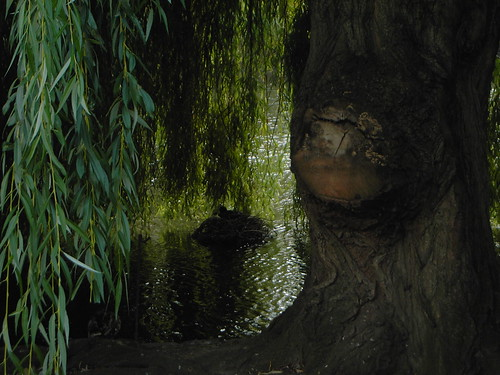 Duck's nest under weeping willow, St James's Park | by lilitu93