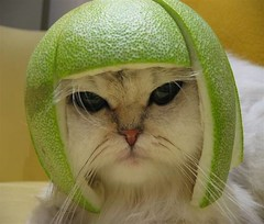 Cats: Beware of Lime Football Helmets | by rickvug