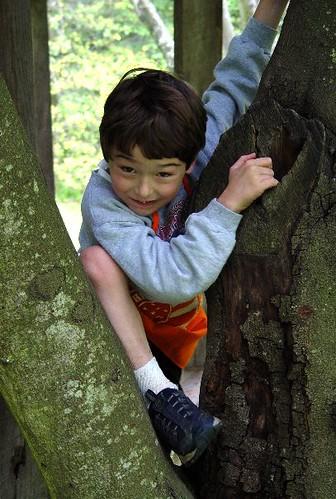 scrambling boy climbing tree | zen Sutherland | Flickr