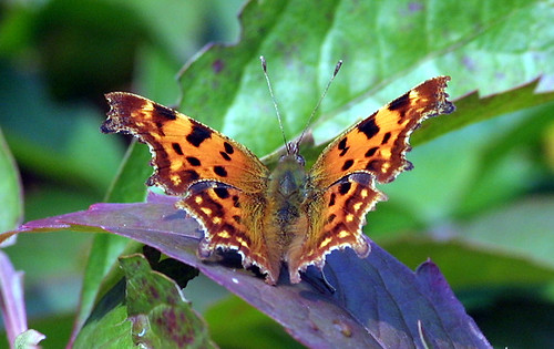 Comma - Open | by webmink