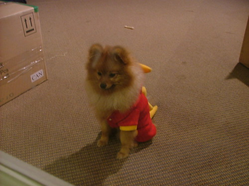 Dog Owner Dressed As Toy