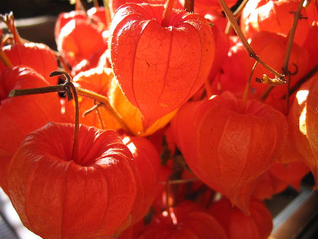 Fall Plants Fall Plants That Look Like Pumpkins And Are