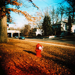 Leaves and Hydrant | by .natalie