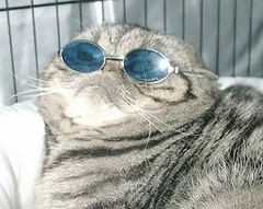 cats in sunglasses ari | by absurdness.com