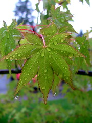 leaf/rain - green | by delightfulmania