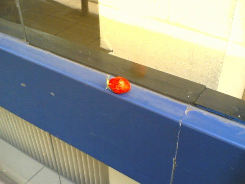 Abandoned Strawberry, Part II | by clotilde