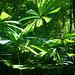 more rainforest