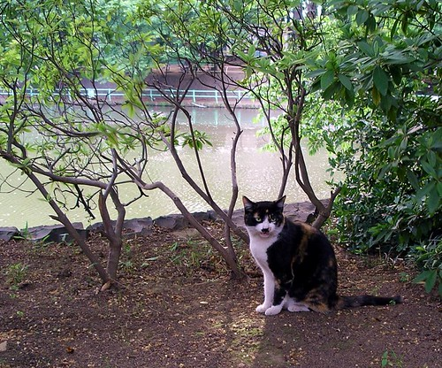 Cat in the park | by Blue Lotus