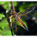 dragonfly 169 2855a