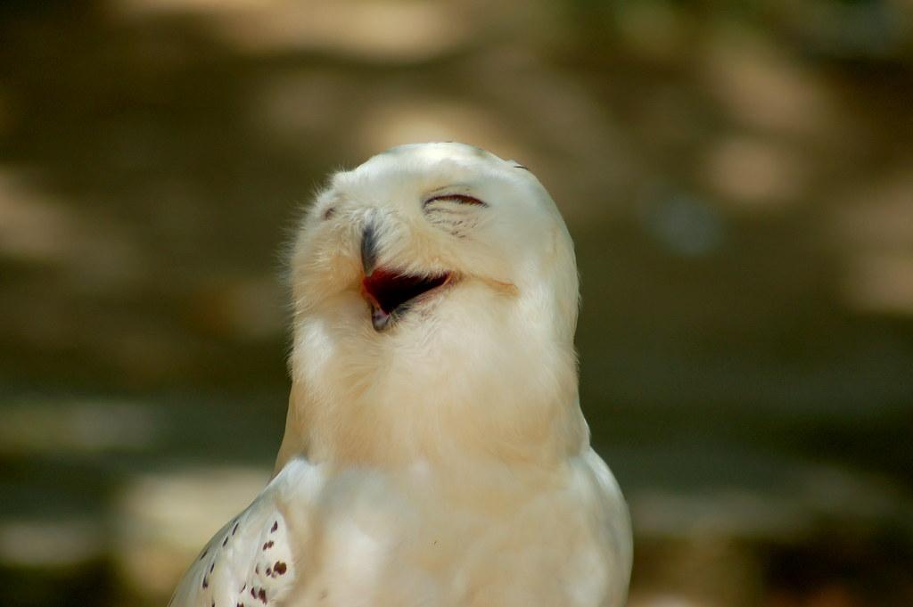 The Laughing Owl Restaurant Goldsboro Nc