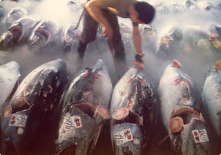 Inspecting Tuna, Tokyo Fish Market, 1960s | by jaybergesen