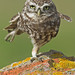 Karate OWL TOYZEEEEEEEE