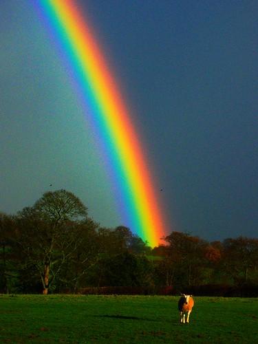 real rainbow wallpaper - photo #31