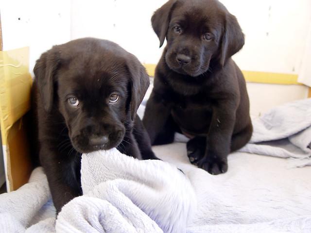 Dog Biting Newborn Puppies