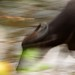 Buffalo Run