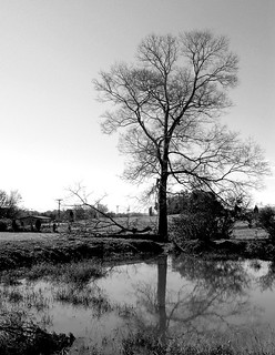 Tree with Pond (B&W) | by Cliff Michaels