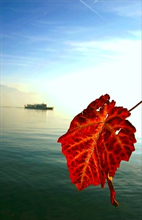 wine leaf and a passing ship | by Vol-au-Vent