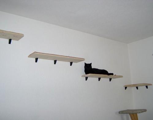 katzenwand keezaa flickr. Black Bedroom Furniture Sets. Home Design Ideas