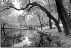 Spring Lake NJ48