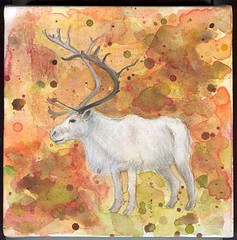 caribou05 | by space hog