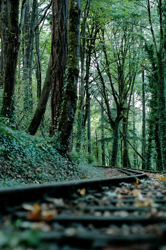 Railroad through the forest | by JoeCollver