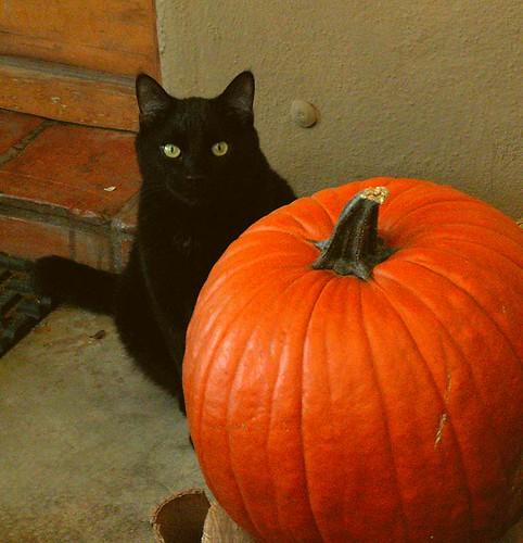Black Cat Pumpkin Design