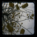 Autumn triptych II