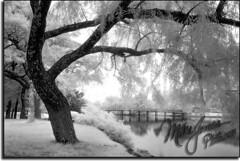 Spring Lake NJ47