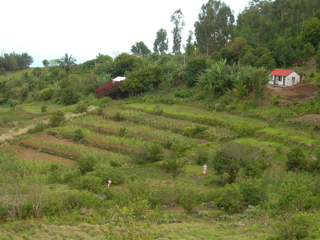 Terrace cultivation rodrigues cultivated land on the for Terrace cultivation