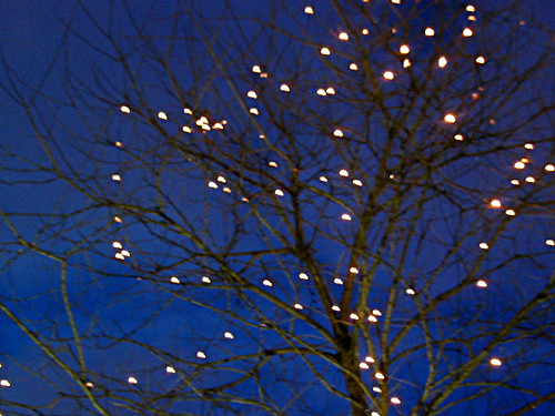 Tree With Fairy Lights Rno Paul Mison Flickr