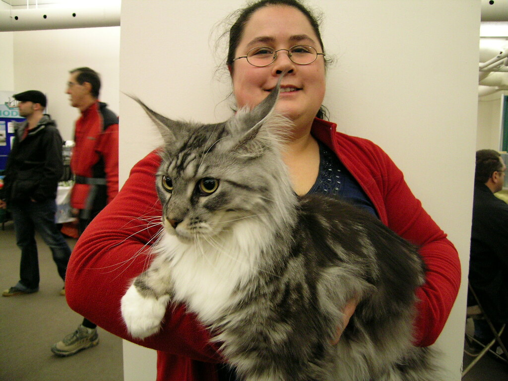 Montreal Cat Show Maine Coon Loved This Guy Gorgeous