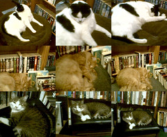 Bookstore cats, Twice Sold Tales, Capitol Hill, Seattle, 09/23/06 | by Mike Baehr