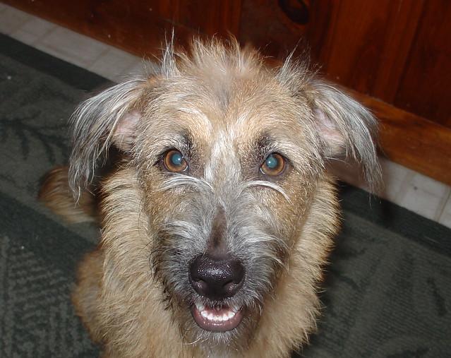 Dog Rescue Northeast Florida