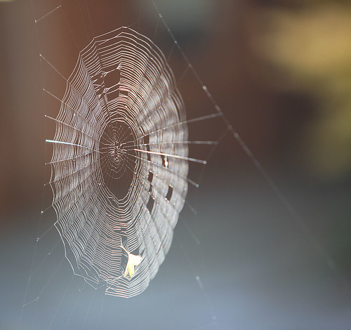 spider web | by .curt.