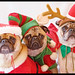 The Trio - Pug Christmas Portrait