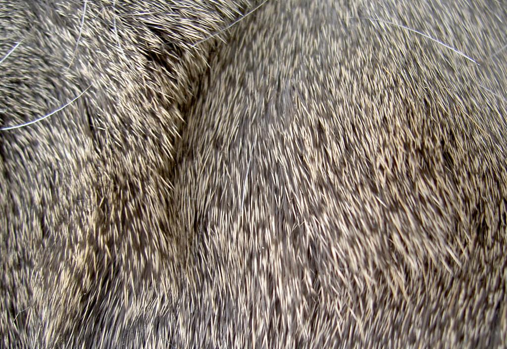 deer fur pattern 1 opacity flickr