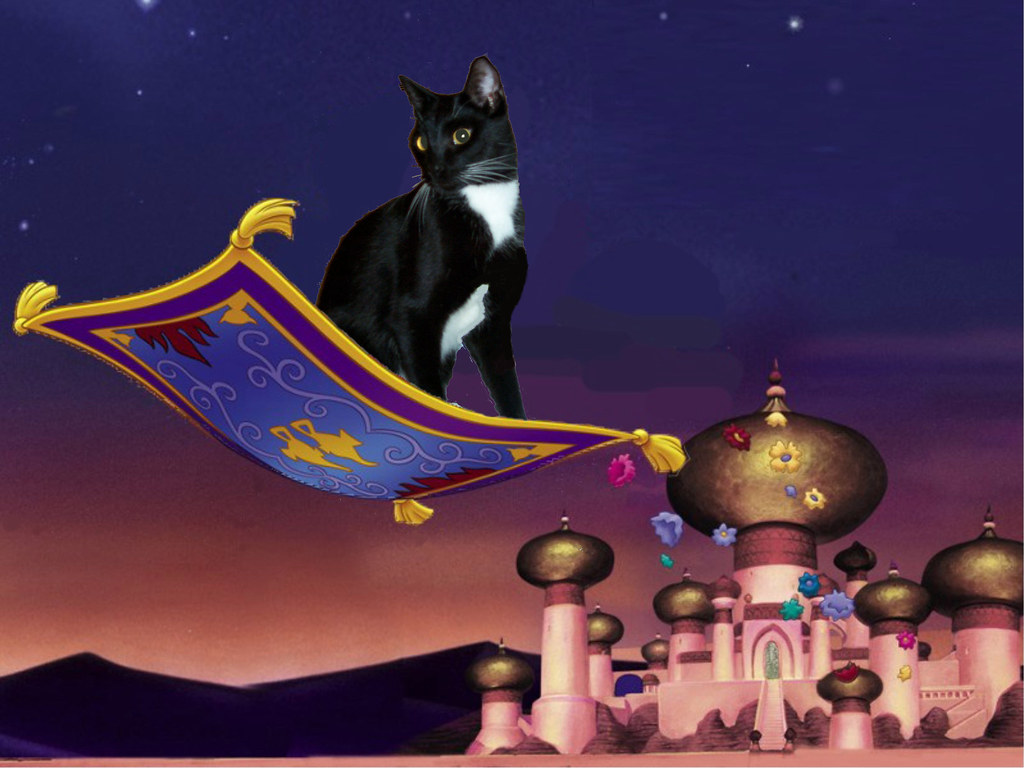 Max S Magic Carpet Ride Max Goes To See A Whole New