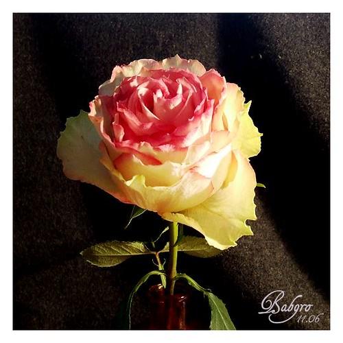 Esperanza-Rose | babgro | Flickr